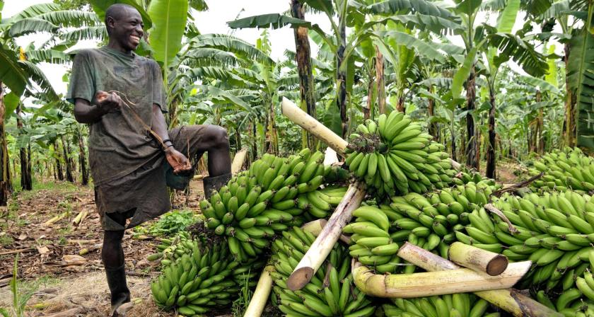 A technoserve photo. A banana farmer in Uganda