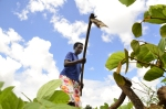 Africa must invest in women farmers in post conflict communities